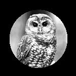 Expert Owls